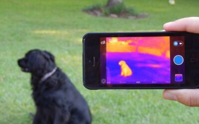 What's the Difference Between Infrared, FLIR, and Full Spectrum Photography?